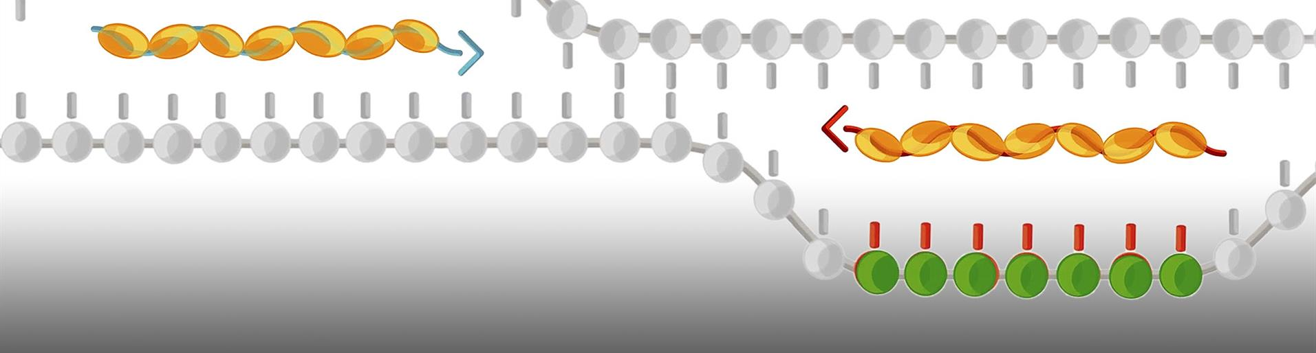 RPA. The versatile PCR replacement.